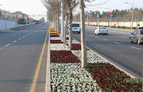 7 milyon 500 bin çiçek dikildi