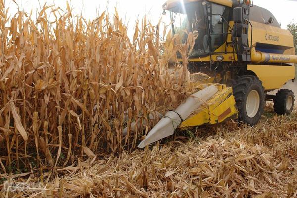 Çiftçilere destekleme ödemesi yapılacak