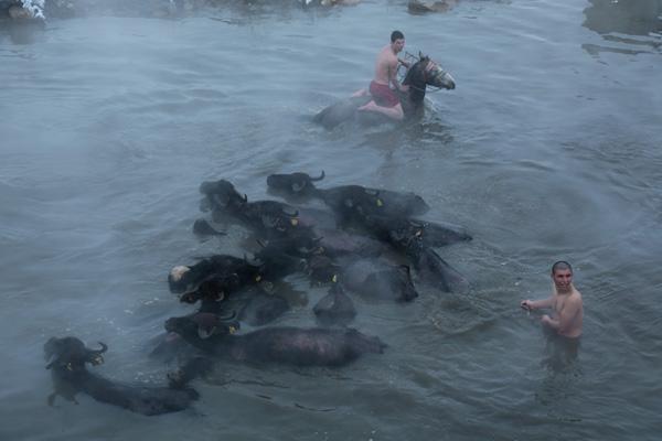 Video Haber: Dondurucu soğukta atlarıyla birlikte yüzüyorlar