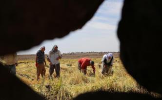 Video Haber:'Tarım BAĞ-KUR primine getirilen zam çiftçiyi zora sokacak'