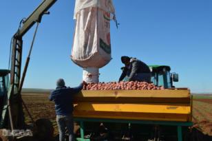 Video Haber:  Cipslik patates üreticileri ekime dertli başladı