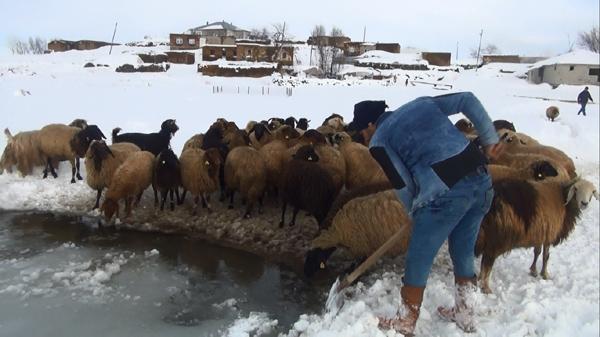 Buzları kırarak hayvanların su ihtiyacını karşılıyorlar