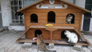 Hayvan sever öğretmenin kedileri evsiz kalmadı