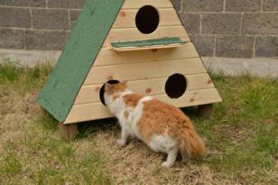 Kedi evi projesi devam ediyor