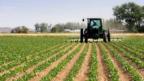 Çiftçiler borç kıskacında