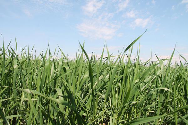 VİDEO HABER: Yağmur çiftçilere bereket getirdi