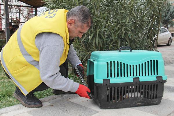 Video Haber: Köpek saldırısına uğrayan kedi korumaya alındı