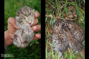 Diyarbakır'da leopar yavruları görüldü