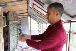 Malatya'dan bırakıldı, Diyarbakır'da beslendiği dama kondu