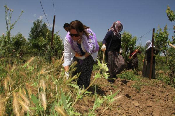 Bismil Belediyesinden kadınlara tarımsal eğitim