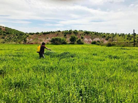 Yağışlardan etkilenen çiftçi sırt pompasıyla ilaçlama yaptı