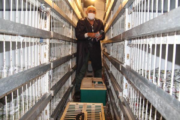 Video Haber: Posta güvercinleri şehirler arası yarışıyor