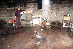 Tarihi surların içine kuş evi yaptı