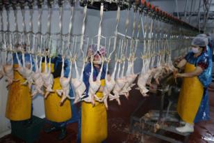 Diyarbakır'dan Avrupa ve Afrika'ya tavuk ihracatı