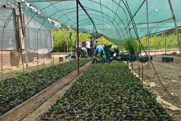 Fidanlık Alanı'nda 360 bin yazlık çiçek üretildi