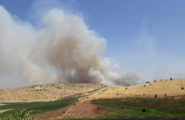Çınar'da ağaçlık alanda yangın
