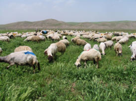 Diyarbakır Kurban Bayramı'na hazır