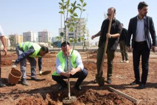 Sitelere meyve ağacı ekme zorunluluğu
