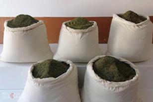 VİDEO HABER – 300 kilogram esrar ele geçirildi