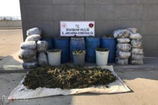 VİDEO HABER – 700 kilogram esrar ele geçirildi