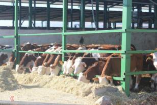 VİDEO HABER – Süt üreticileri zamlardan şikâyetçi