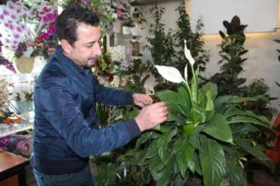 Salon bitkisi bakımında doğru bilinen yanlışlar