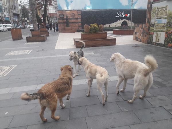 Başıboş köpekler korkutuyor