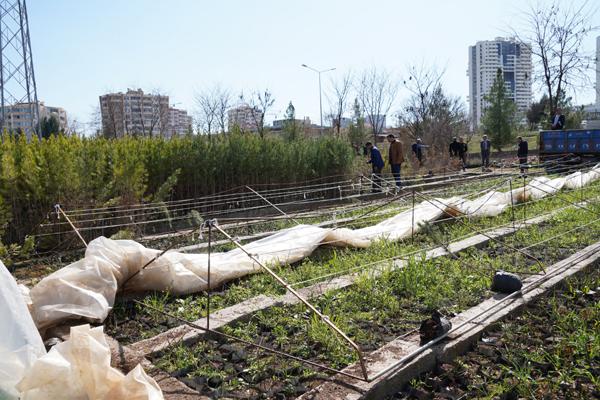 Büyükşehir bitki üretim kapasitesini artırıyor!