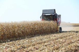 'Pamuk ve mısır üretimini mecburiyetten bırakıyoruz'