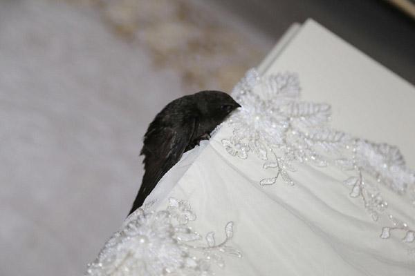 VİDEO HABER – Diyarbakır'da Ebabil kuşu bulundu