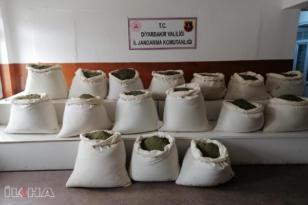 VİDEO HABER – Lice'de 547 kilogram esrar ele geçirildi