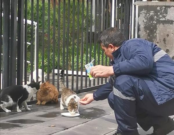 Sokak hayvanlarının imdadına temizlik ekipleri yetişti