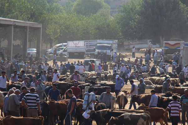 Diyarbakır'daki hayvan pazarı kapatıldı