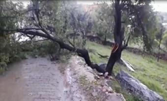 Şiddetli yağmur ve fırtına ağaçları devirdi
