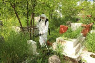 Büyükşehir Belediyesinden mezarlıklarda yabani ot temizliği