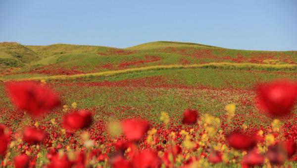 2 bin 787 bölge doğal sit alanı ilan edildi