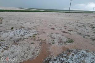 VİDEO HABER – Mayıs ayında yağan dolu tarlaları beyaza bürüdü