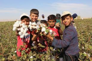 VİDEO HABER – Çiftçiler, pamuk ekimine başladı