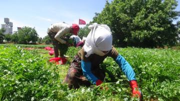 VİDEO HABER – 'Çiftçilerin sorunları görülmeli'