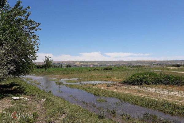 Köylünün ekini Ilısu Baraj sularının altında kaldı
