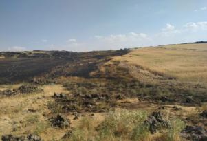 60 dönümlük ekili arazi kül oldu