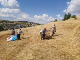 VİDEO HABER – Çiftçi hasattan memnun!