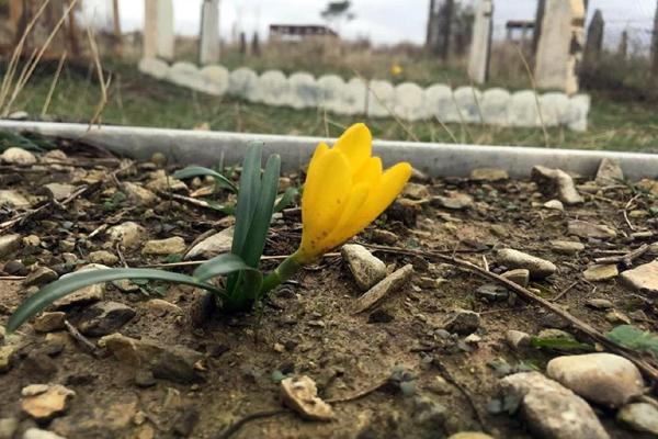 Gülbahar Altaş yazdı: İsimsiz kadınların, isimsiz mezarları