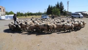 Tüccarlar Hayvan Borsası'nın açılmamasından şikayetçi