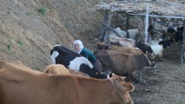 Köylüler süt ürünlerini toplamaya başladı
