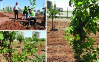 Kent içi tarım meyve vermeye başladı