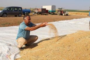 VİDEO HABER – Çiftçiler: Kazancımızın büyük kısmı elektriğe gidiyor