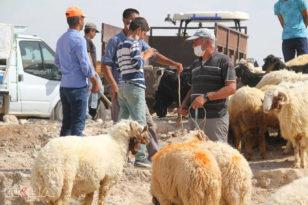 Korona hayvan pazarlarını da vurdu; Kurbanlıklar elde kaldı!