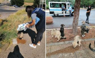 Sur zabıtası sokak hayvanlarını unutmuyor!