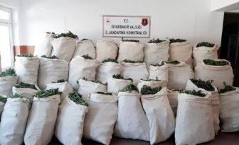 VİDEO HABER – Diyarbakır'da 756 kilo esrar ele geçirildi